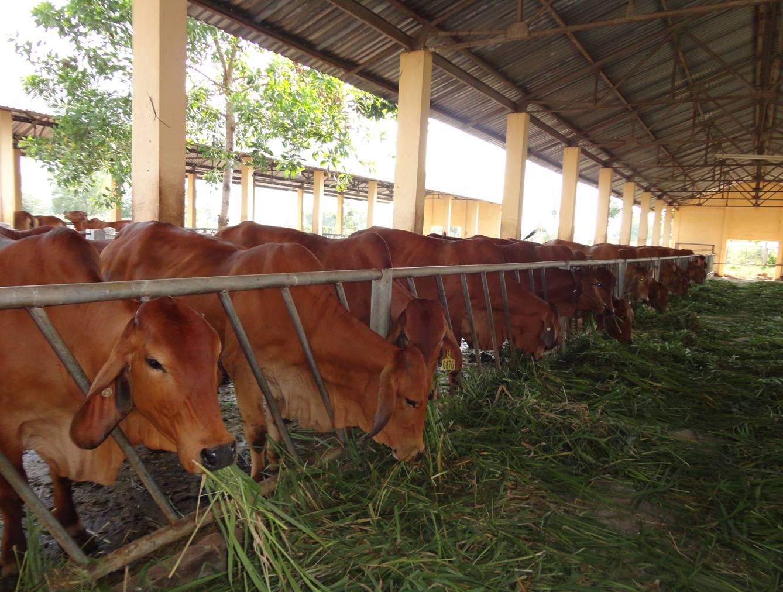 hồ sơ vay vốn quỹ hỗ trợ nông dân
